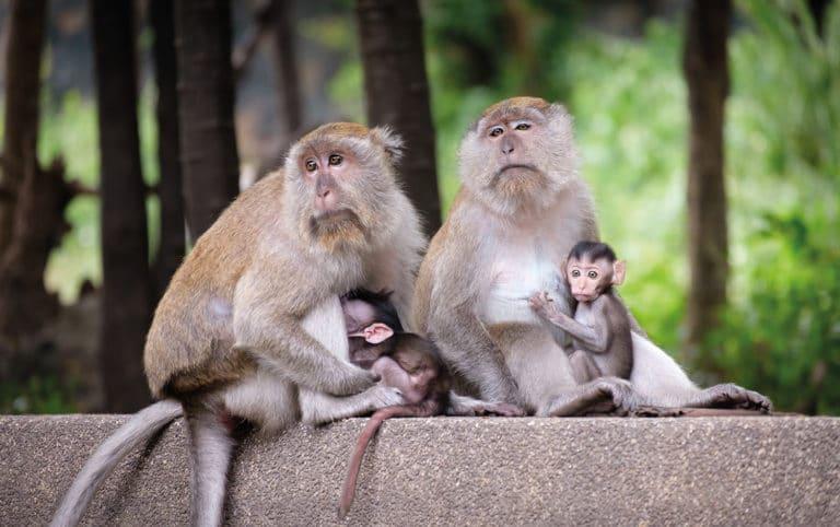 El primate altruista
